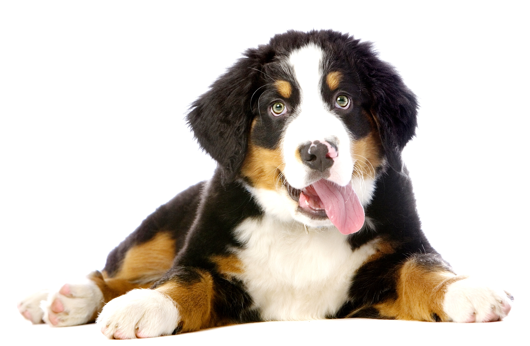 Adiestramiento canino en Albacete