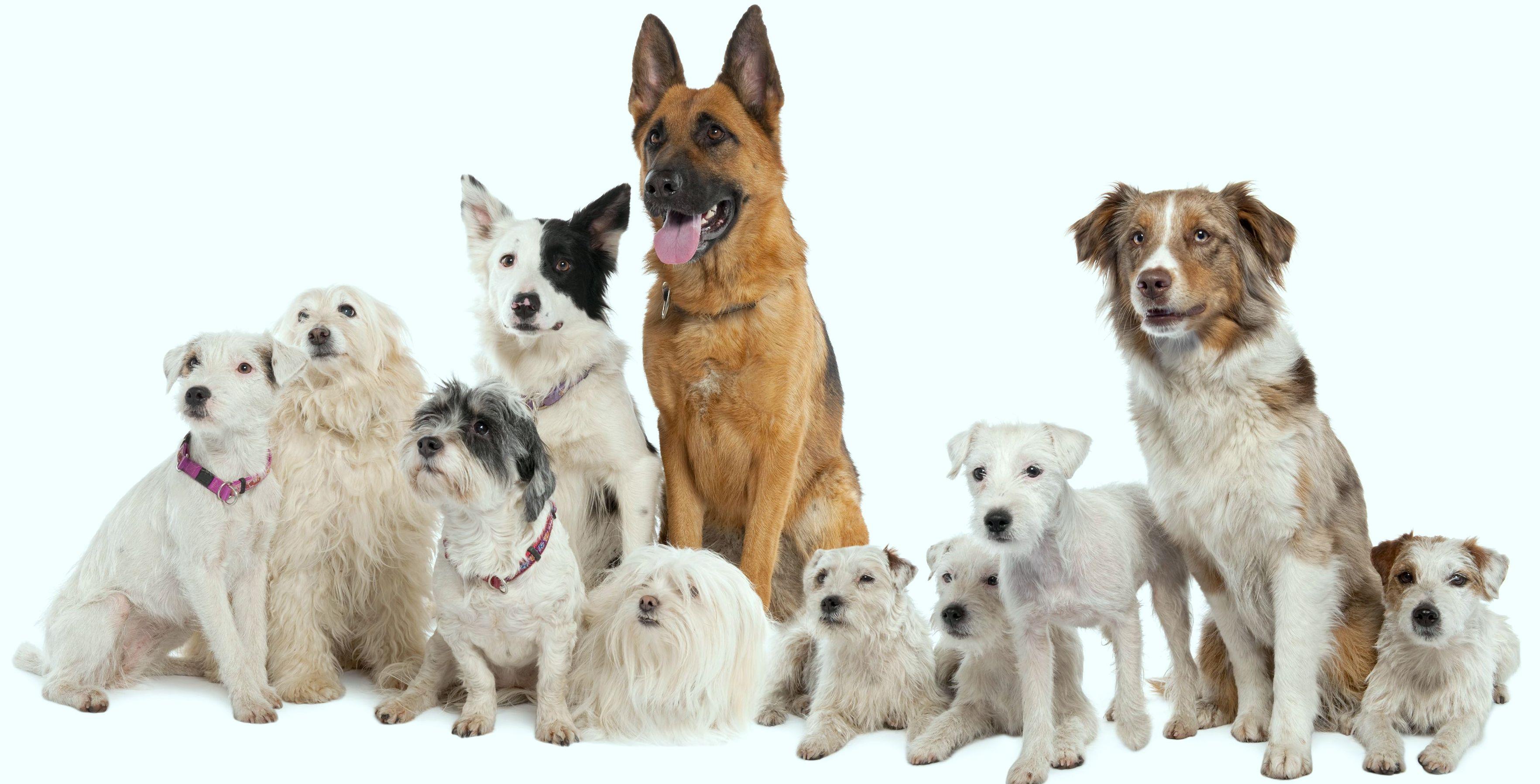 Los perros, nuestros buenos amigos
