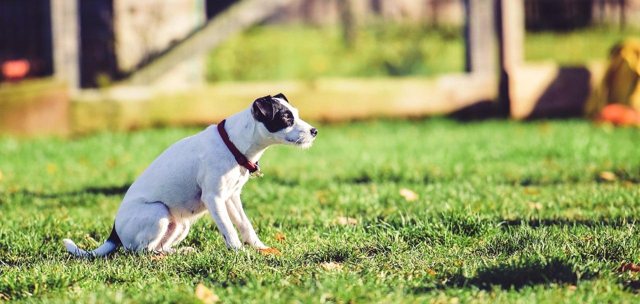 Residencia-canina-albacete