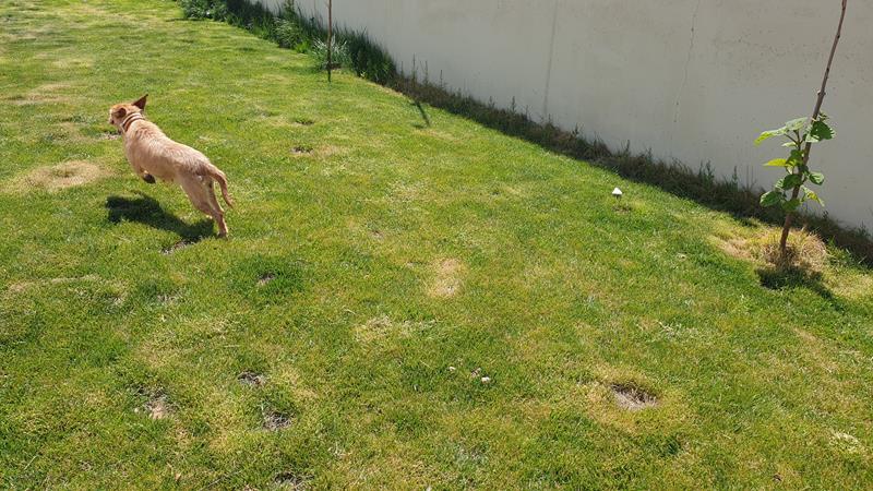 Residencia para perros en MInaya - Albacete