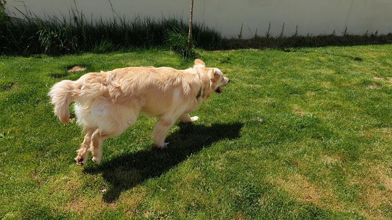 Hotel canino en La gineta