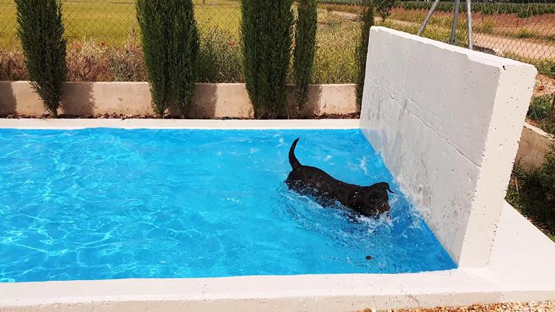 Hotel de perros Villarrobledo
