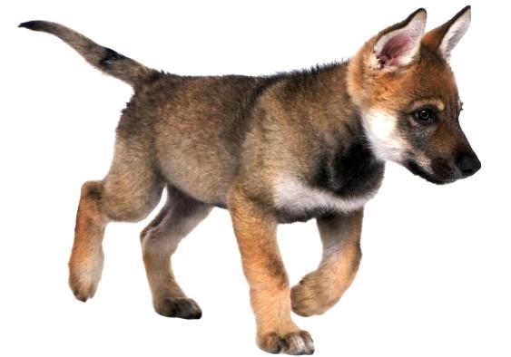 Tenencia responsable de perros