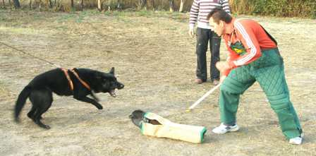 Curso de adiestrador canino profesional Albacete