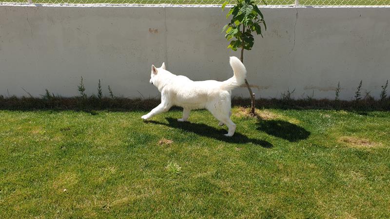 Residencia de perros Madrigueras