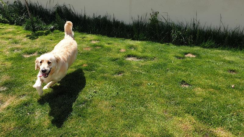 Residencia canina la Gineta